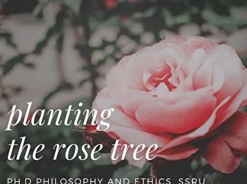 planting the rose tree
